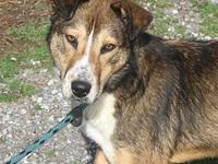 SHEP (6290)'s story MEET SHEP! A 3-5 year old, male,