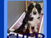 SHEP's story Please contact Jenny Cope