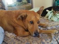 I need to rehome my shepard mix . hes about 7 yrs old