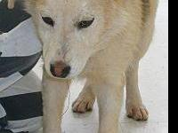 Shepherd - 7413 Adopted - Medium - Adult - Female -