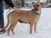 Shepherd - Debbie - Large - Adult - Female - Dog Are