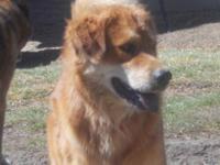 Shepherd - Deja - Large - Adult - Female - Dog