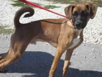 Shepherd - Dover - Large - Adult - Male - Dog My name