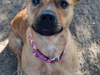 Shepherd - Eden - Medium - Young - Female - Dog