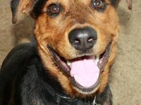 Shepherd - Feinberg - Medium - Young - Male - Dog
