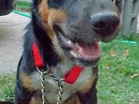 Shepherd - Gary - Medium - Young - Male - Dog Shepherd