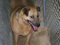 Shepherd - Kyllie - Medium - Adult - Female - Dog Kylie