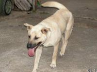 Shepherd - Luna 7045 - Medium - Adult - Female - Dog