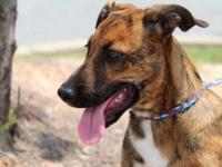 Shepherd - Penelope - Large - Young - Female - Dog All