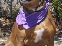 Shepherd - Penny - Medium - Young - Female - Dog Penny