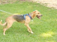 Shepherd - Ray - Medium - Adult - Male - Dog Ray is a 2