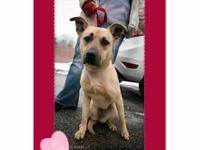 Shepherd - Summer ~ Adoption Pending - Medium - Young -