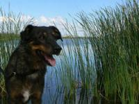 Shepherd - Tulla - Medium - Adult - Female - Dog Tulla