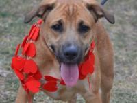 Shepherd - Venus - Medium - Adult - Female - Dog Venus
