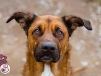 Shepherd - Yola - Medium - Adult - Female - Dog