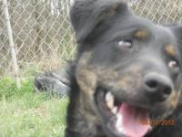 Shepherd - Zac - Medium - Adult - Male - Dog My name is