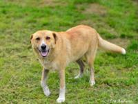 Shepherd - Angel - Medium - Adult - Female - Dog Angel