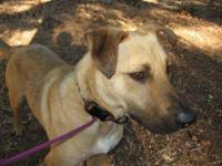 Shepherd - Dozer - Medium - Senior - Male - Dog The