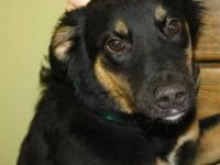 Shepherd - Leela - Medium - Baby - Female - Dog Leela