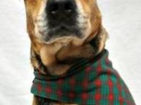 Shepherd - Lucky - Medium - Adult - Female - Dog (For