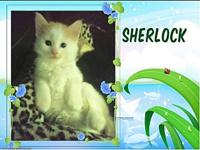 Sherlock's story Adoption fee includes deworming, age