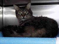 SHERLOCK's story Shy, timid. Owner surrendered due to