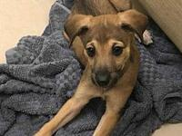 Sherman's story Look at my cuteness! I am a