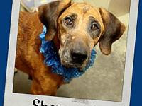 SHERWOOD's story Meet Sherwood! This handsome guy is a