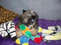 Adorable lively little puppies all set for their for