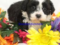 WE ALSO HAVE VIDEOS OF THE PUPPIES AT