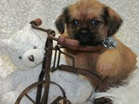 We have 2 female & & 1 male shiffon puppies, approx.