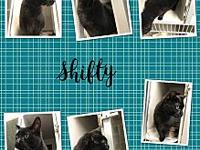 Shifty's story Shifty is an 18 year old neutered male