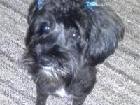 PRINCESS WAS BORN ON MARCH 7, 2012 SHE IS SPAYED, UTD