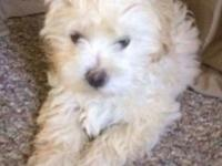 I have two shih poo puppies left from a litter of five