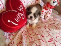 I have five tiny little shih Tuz new puppy's ready for