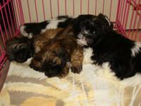 BEAUTIFUL AND LOVING PUPS READY FOR THEIR NEW LOVING,