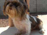4 month old SHIH TZU puppies one male one female very