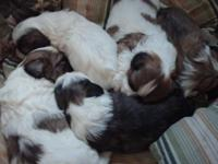 I have 2 male and 3 women first gos wormed. mama and