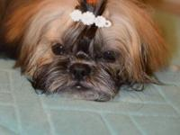 We are looking for a new home for our two female Shih