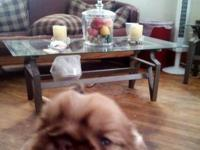 I have 3 shih tzus with rare colors. There are two