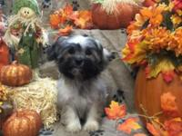 Very playful, sweet and loving puppy. Would make a