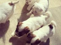Adorable, energetic puppies are looking for loving,