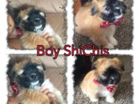 I have 3 puppies up for adoption, very loving and have