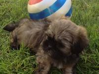 We currently have 2 gorgeous puppies that are ready to
