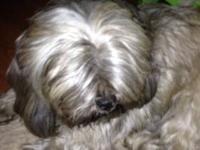 Rosco is a playful male Shih Tzu whom we have had since