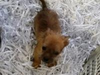 Darling guy puppy. Up to date on vaccination and