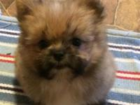 Female Puppies For Sale In Lyons Nebraska Classifieds Buy And