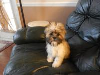 I have a female shih-tzu 4 1/2 monthes old has all her