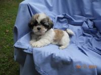 We have beautiful puppies that are ready to go to their