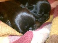 Puppies born on July 18th!!! We have 3 boys and 2